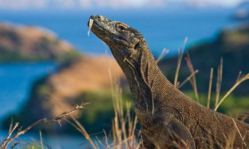Index of /thumbs/about/komodo-national-park/